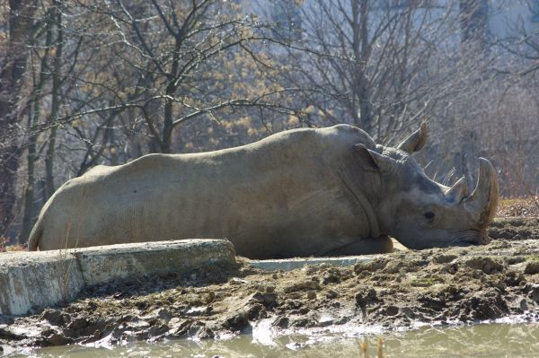 Зоопарк София Носорог