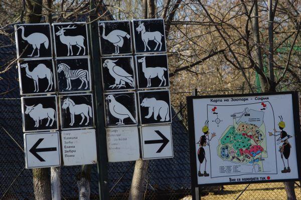 Зоопарк София Щрауси