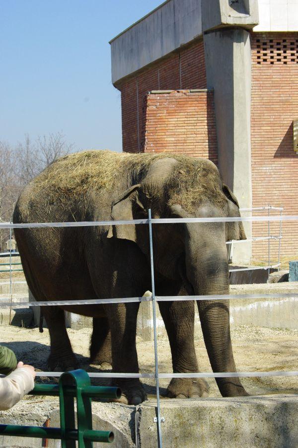 Зоопарк София Слон